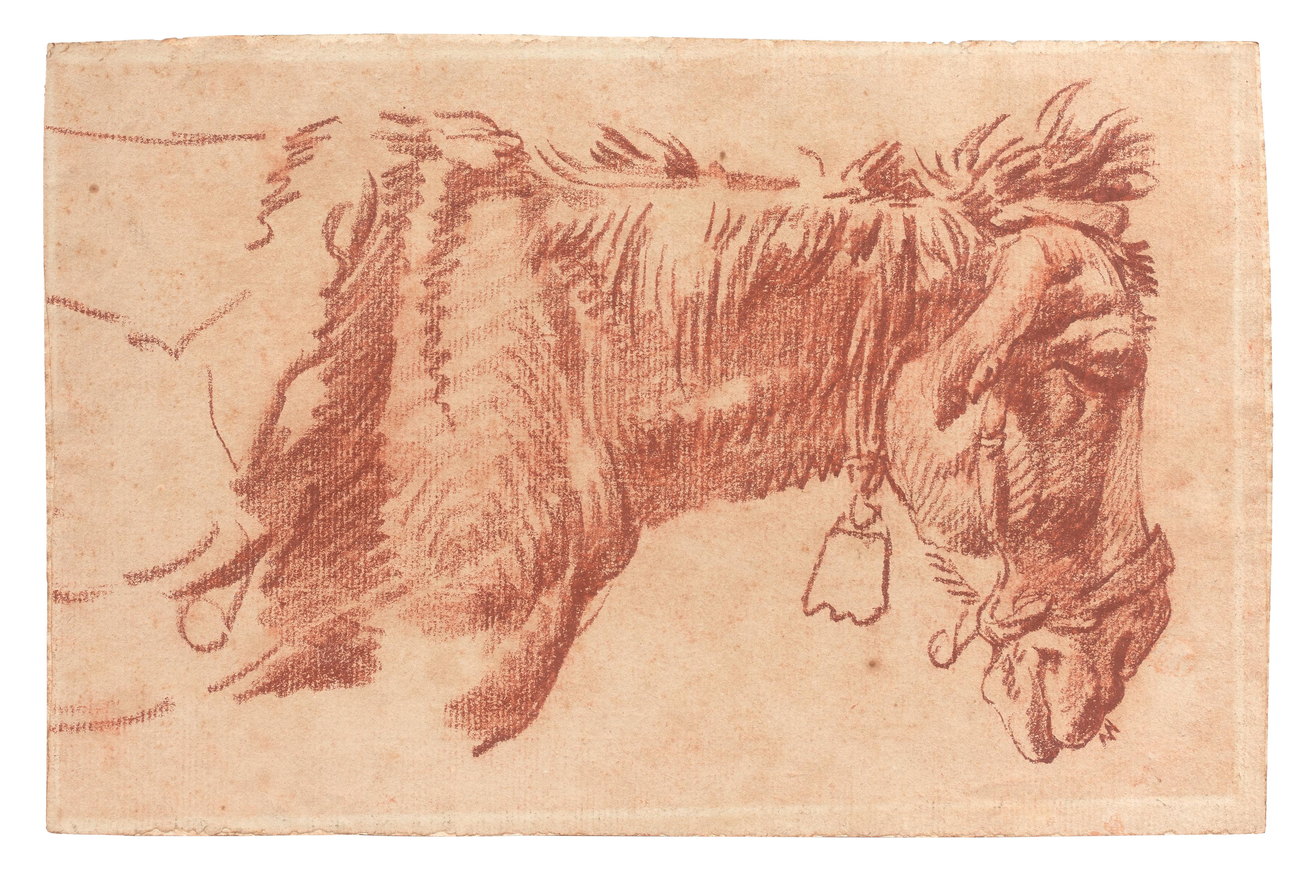 Étude de tête d'âne de profil